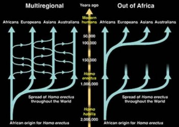 "Figure 1: The ""Out of Africa"" hypothesis and the ""multiregional theory"". By following the relatedness of modern humans the most common recent ancestor can be assessed (electrobleme 2017)."