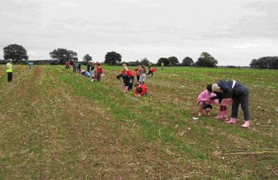 Figure 1 - Children from North Duffield school fieldwalking (Image Copyright - Archaeology North Duffield)