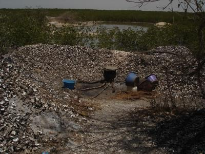 Figure 3 - A Senegal shell midden in the making (Image Copyright - Matt Williams)