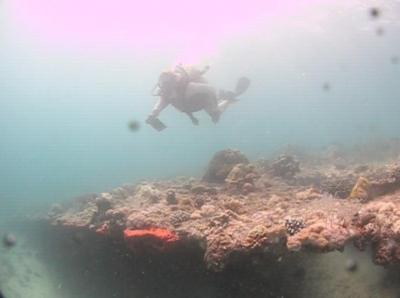 Figure 1 - Matt diving in the Red Sea (Image Copyright - Matt Williams)