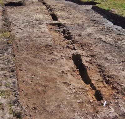 Intact sections of the palisade foundations in Trench AG (Used with kind permission of Barbara Grant)