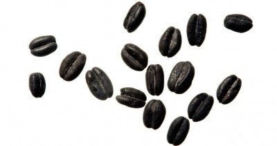 Figure 1: Charred wheat seeds (Reproduced with kind permission of the Colonial Williamsburg Foundation)